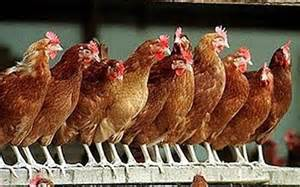 CPC Not Compliant? The Chickens Are Coming Back To Roost