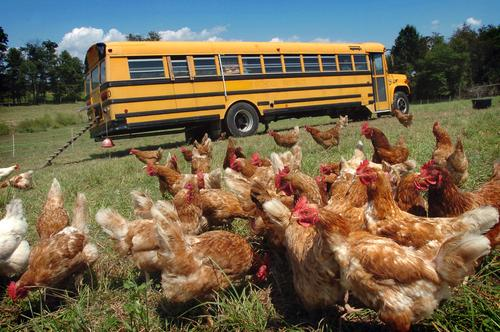 Bus Chickens Come Home To Roost…